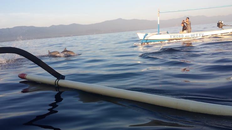 Lovina Bali dolfijnen