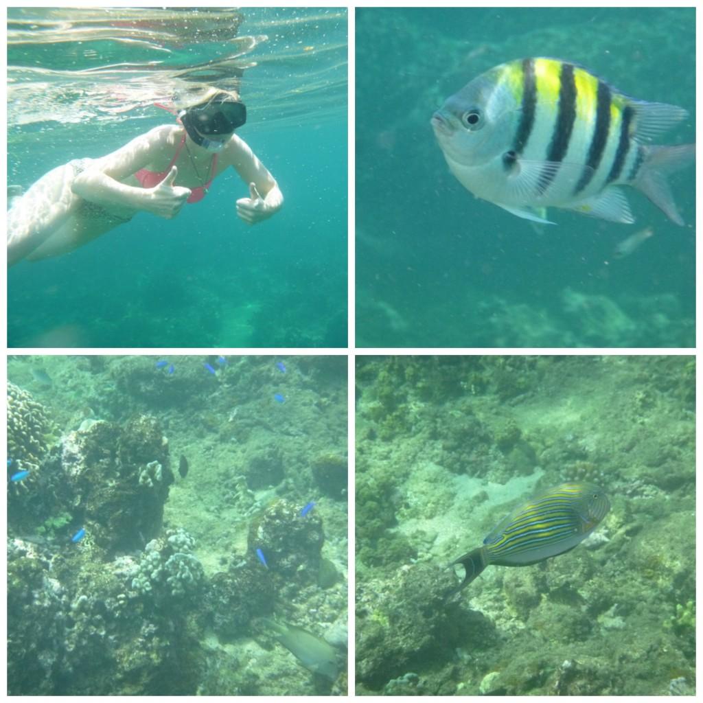 Lovina Bali snorkelen