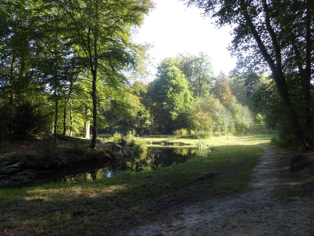 ANWB-wandelroute Paterswolde