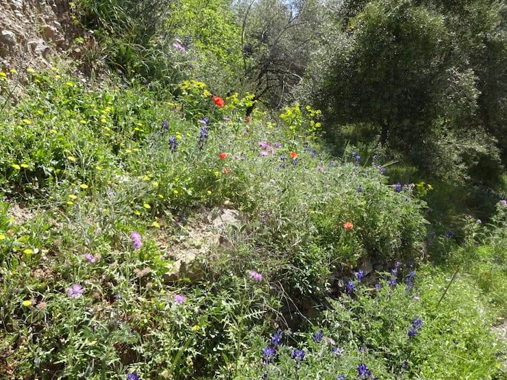 bloemen kreta april