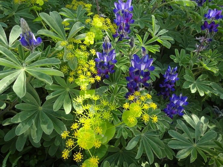 bloemen wandelvakantie kreta