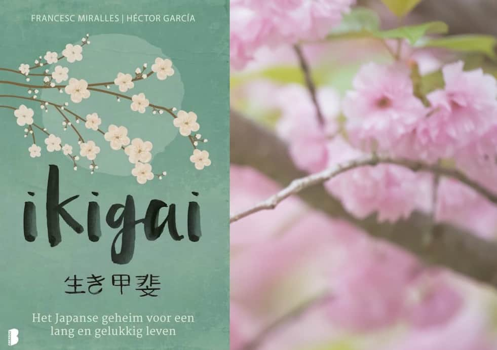 review ikigai